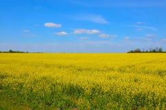 Неоглядные поля Украины стоковые изображения rf