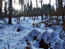Неожиданный переход от осени к зиме в зоне каньона реки няни и резервуара Gubsensee стоковое изображение