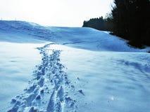 Неожиданный переход от осени к зиме в зоне каньона реки няни и резервуара Gubsensee стоковая фотография