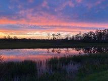 неоновый заход солнца в поле и 2 деревьях стоковые изображения rf