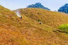 Неопознанная этническая девушка горя солому для того чтобы удобрить землю Стоковые Фотографии RF