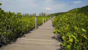 Неопознанные люди visitted зеленый лес мангровы на ремне Prong Tung или золотом поле мангровы, Rayong, Таиланде видеоматериал