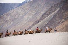 Неопознанные путешественники людей ехать на верблюдах стоковые изображения