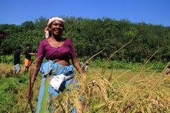 Неопознанный наемный сельскохозяйственный рабочий Стоковое Фото