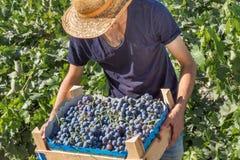 Неопознанный работник работает в винограднике, Uzumlu, Erzincan, Турции стоковая фотография