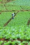 Неопознанный спрейер фермера их поле капусты, Petchabun, Таиланд Стоковые Фотографии RF