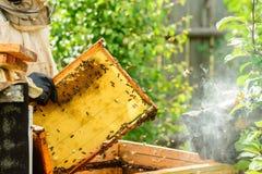 Неопознанный beekeeper держа сот с пчелами для того чтобы контролировать si Стоковое Изображение RF