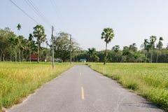 Неочищенные рисы в поле, Таиланде, зеленом поле, вырезывание дороги через ¡ fieldsภСтоковые Фотографии RF