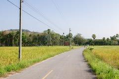 Неочищенные рисы в поле, Таиланде, зеленом поле, вырезывание дороги через ¡ fieldsภСтоковая Фотография