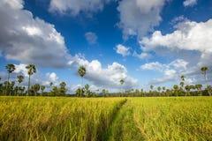Неочищенные рисы в поле, Таиланде, зеленом поле Стоковое Изображение