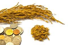 Неочищенные рисы и монетки Стоковая Фотография
