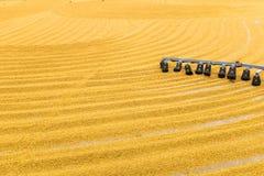 Неочищенные рисы с трактором стоковая фотография rf