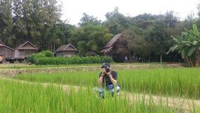 Неочищенные рисы с фотографами Стоковое Фото