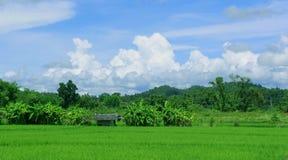 Неочищенные рисы Стоковая Фотография RF
