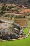неочищенный рис Мадагаскара гористой местности Стоковые Изображения