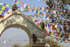 Непальские флаги молитве в комплексе виска Swayambhunath стоковая фотография