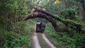 НЕПАЛ - 11-ОЕ НОЯБРЯ 2018: Туристы ехать виллис на путешествии сафари в национальном парке Chitwan видеоматериал