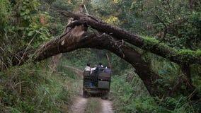 НЕПАЛ - 11-ОЕ НОЯБРЯ 2018: Туристы ехать виллис на путешествии сафари в национальном парке Chitwan сток-видео