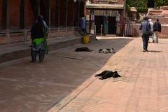 Непал, Bhaktapur, собаки на улице Стоковое Изображение RF