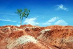 неплодородные почвы Канада ontario стоковая фотография