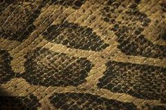 Неподдельная кожаная змейка и масштабы взгляд от верхней части стоковое фото