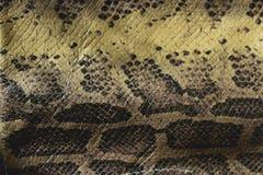 Неподдельные кожаные змейки взгляд от верхней части стоковое изображение rf