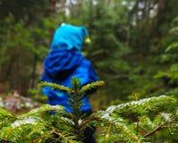 Непознаваемый мальчик в голубой идти далеко от елевого дерева Стоковое Фото
