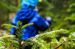 Непознаваемый мальчик в голубой идти далеко от елевого дерева Стоковое фото RF