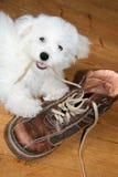 непослушный щенок Стоковые Изображения RF