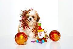 непослушный щенок Стоковая Фотография RF