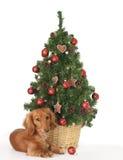 непослушный щенок Стоковая Фотография