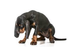 непослушный щенок стоковое изображение rf