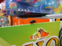 Неподвижная муха стоковая фотография