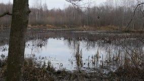 Непроходимое болото в осени акции видеоматериалы