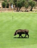 Непрошеный участник на гольфе t призрения игрока Гэри пригласительном стоковая фотография rf