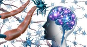 Нервные клетки внутри мозга иллюстрация штока