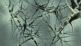 нервы Стоковые Фотографии RF