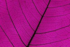 Нервюры и вены лист Стоковые Изображения RF