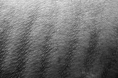 нервюры носорога стоковые фотографии rf