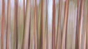 Нерезкость леса Стоковое фото RF