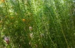 Нерезкость зеленого цвета завода Стоковое Изображение