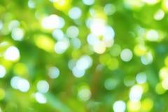 Нерезкость зеленой предпосылки Стоковое Фото