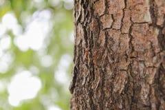 Нерезкость поверхностного дерева и естественной предпосылки деревьев Стоковые Фото