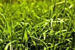 Нерезкость травы на всем пути Стоковая Фотография RF