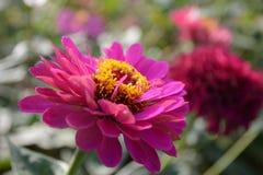 Нерезкость цветка, природа стоковое изображение rf