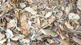 Нерукотворный лист осени Стоковое Изображение