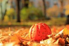 Несенная старая оранжевая игрушка формы тыквы