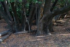 Несколько деревьев в парке стоковая фотография rf