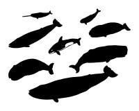 несколько китов Стоковые Фото
