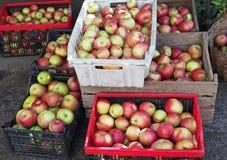 Несколько коробок с зрелыми яблоками стоковые фото